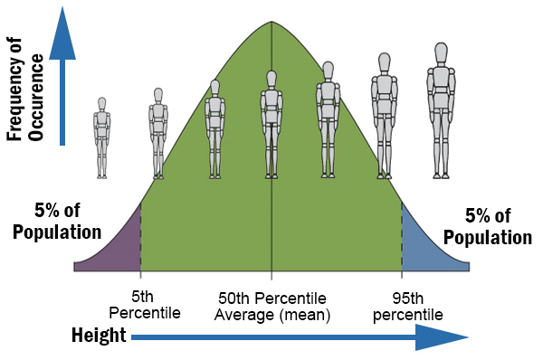Worker height graphic - short to tall and the percentages